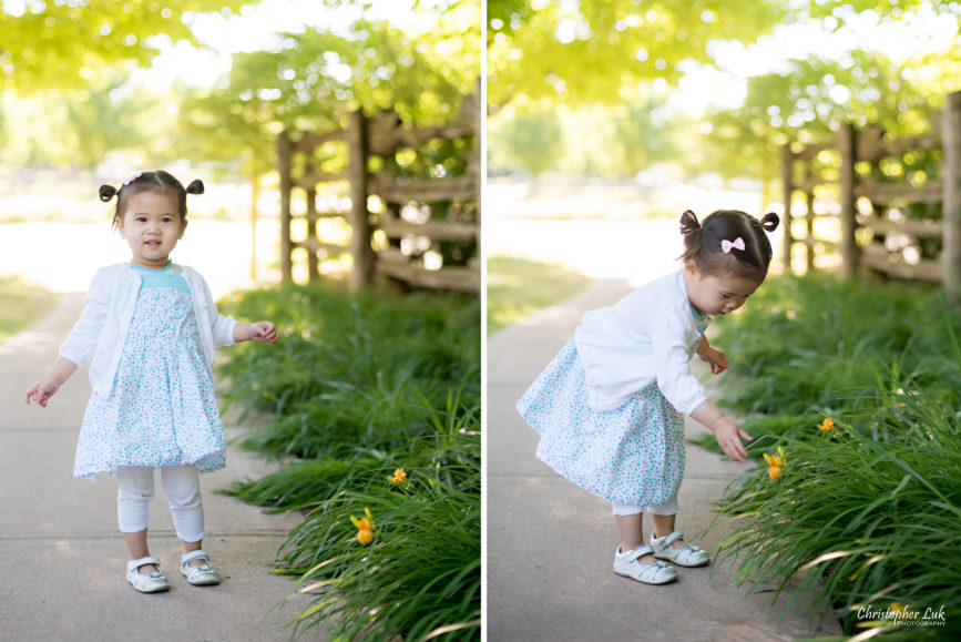 Christopher Luk (Toronto Wedding, Lifestyle & Event Photographer) - Markham Family Maternity Children Session Toddler Infant Baby Girl Yellow Plant Daffodil Flower