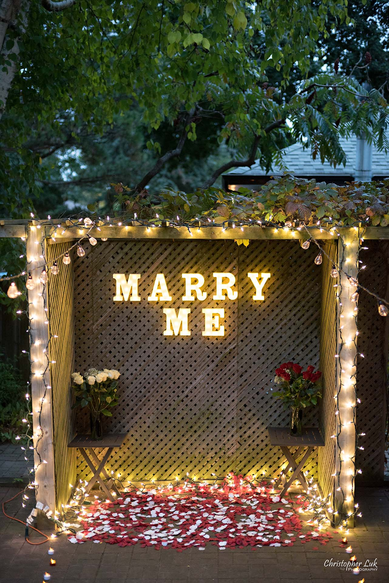 Christopher Luk Toronto Wedding Photographer - Backyard Surprise Proposal Engaged Engagement Gazebo Christmas Fairy Twinkle Lights Flower Petals Marry Me Wide Lights Setup Vertical